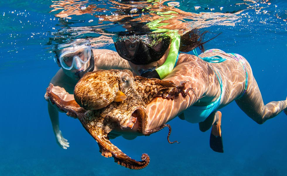 snorkeling and scuba diving essay Page 1 of 4 fast facts: recreational scuba diving and snorkeling there are between 27 to 35 million active scuba divers in the us with as many as 6 million active.