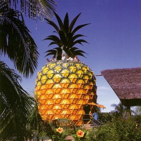 1583869706 bolshoj ananas v kvinslende